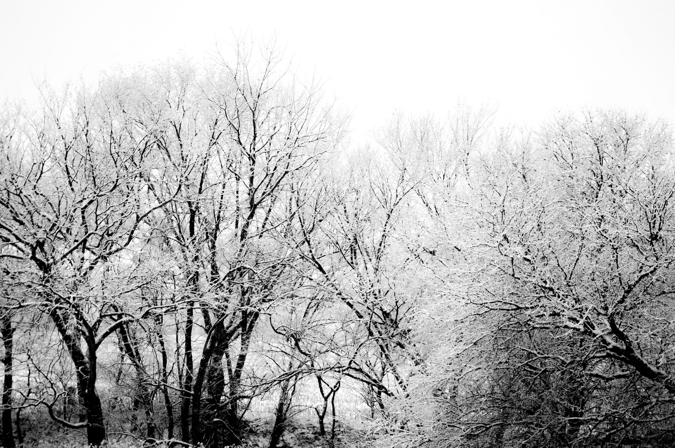 Winter's Silhouette